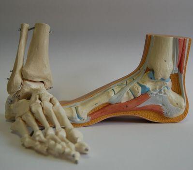 Orthopedische Schoentechniek Vansteenwegen -  Steunzolen